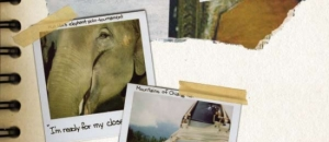 A Trip Within Thailand: Pachyderms and Polaroids by Jeremy Kost